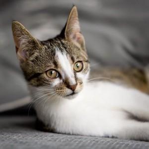 Luna op de bank poserend voor Kattenoppas.nu uit Woerden geplaatst in dierendag blog