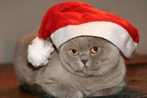 Grijze poes met kerstmuts uit de kerstversiering.
