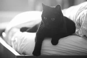 Zwarte kat op voeteneinde beded