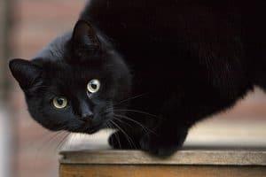Zwarte poes buiten op tafel